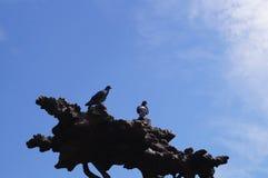Os pombos sentam-se em uma árvore de bronze Yoshkar-Ola 2018 imagens de stock royalty free