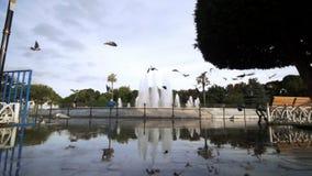 Os pombos voam em nuvens Turquia Istambul do céu azul da manhã do quadro do movimento lento vídeos de arquivo