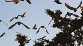 Os pombos voam fora vídeos de arquivo