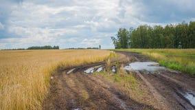 Os pontos do trigo voam no vento Campo de trigo, estrada secundária Fotos de Stock Royalty Free