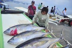 Os porteiros estão carregando o atum no caminhão à fábrica do marisco na cidade de General Santos Imagem de Stock
