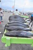 Os porteiros estão carregando o atum no caminhão à fábrica do marisco na cidade de General Santos Imagens de Stock