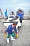 Os porteiros estão carregando o atum no caminhão à fábrica do marisco na cidade de General Santos Fotografia de Stock