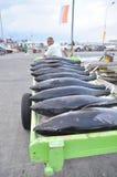Os porteiros estão carregando o atum no caminhão à fábrica do marisco na cidade de General Santos Fotografia de Stock Royalty Free