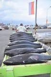 Os porteiros estão carregando o atum no caminhão à fábrica do marisco na cidade de General Santos Fotos de Stock