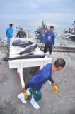 Os porteiros estão carregando o atum no caminhão à fábrica do marisco na cidade de General Santos Imagens de Stock Royalty Free