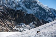 Os porteiros que cruzam Cho La passam na região de Everest, Nepal Fotografia de Stock Royalty Free