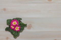 Os potenciômetros de flor do close up na mesa e no creme de madeira colorem o papel de parede Imagem de Stock Royalty Free