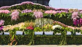 Os potenciômetros das flores no feriado florescem em Baku Imagens de Stock