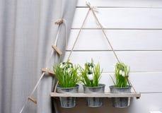 Os potenciômetros decorativos das flores decoram uma parede Fotografia de Stock