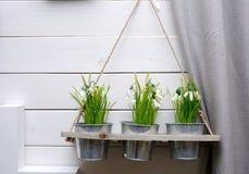 Os potenciômetros decorativos das flores decoram uma parede Imagem de Stock