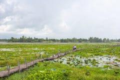 Os povos andam na ponte de madeira velha sobre o lago, Kea Dam, Mahasarakham, Tailândia Fotos de Stock