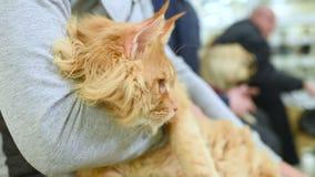 Os povos com animais de estimação estão esperando o exame médico vídeos de arquivo