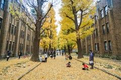 Os povos com suas crianças estão na universidade do Tóquio para ver árvores da nogueira-do-Japão no outono temperar Japão recolhi Foto de Stock Royalty Free