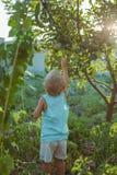 os povos crescem o alimento natural fotografia de stock royalty free
