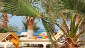 Os povos descansam em uma praia ensolarada sob as folhas das palmeiras video estoque