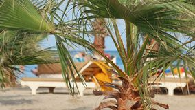 Os povos descansam em uma praia ensolarada sob as folhas das palmeiras que balançam pelo vento vídeos de arquivo