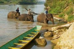Os povos do Lao cruzam o rio com os elefantes no nascer do sol em Luang Prabang, Laos Imagem de Stock