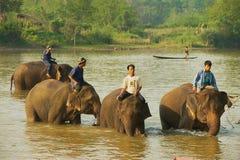 Os povos do Lao cruzam o rio com os elefantes no nascer do sol em Luang Prabang, Laos Imagens de Stock