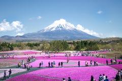 Os povos do Tóquio e outras cidades vêm ao Mt Fuji e aprecia a flor de cerejeira na mola cada ano Foto de Stock Royalty Free