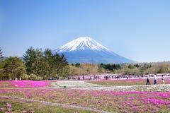 Os povos do Tóquio e outras cidades vêm ao Mt Fuji e aprecia a flor de cerejeira na mola cada ano Imagens de Stock Royalty Free