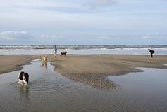 Os povos e os cães no Mar do Norte encalham nos Países Baixos Fotos de Stock Royalty Free