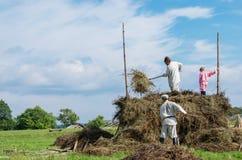 Os povos em trajes nacionais trabalham no campo na ilha Kizh Imagem de Stock Royalty Free