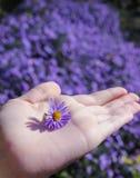 Os povos entregam com flor azul Foto de Stock