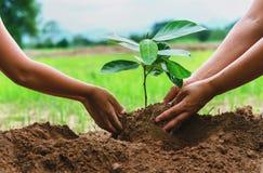 os povos entregam a planta de ajuda a árvore que trabalha junto na exploração agrícola concentrada Fotos de Stock