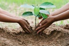 os povos entregam a planta de ajuda a árvore que trabalha junto na exploração agrícola concentrada Fotos de Stock Royalty Free