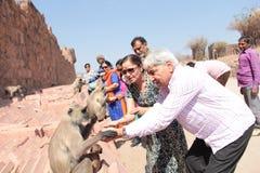 Os povos indianos alimentam o langoor preto à mão Imagem de Stock