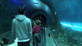 os povos 4k andam no túnel e nos olhares do aquário através do vidro como a nadada dos peixes filme