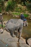 Os povos não identificados banham elefantes no rio de Mae Sa Noi em Mae S Fotos de Stock