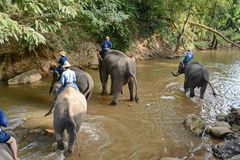 Os povos não identificados banham elefantes no rio de Mae Sa Noi em Mae S Imagens de Stock Royalty Free