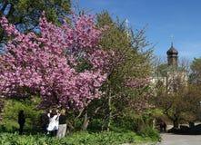 Os povos no jardim botânico em Kiev estão admirando a árvore de florescência foto de stock