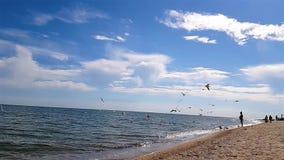 Os povos no litoral, gaivota voam sobre a praia, gaivota voam sobre a praia em um movimento lento vídeos de arquivo