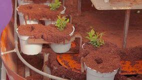 Os povos plantaram plantas em uns potenci?metros no transporte, planta plantaram o close-up das m?os Transporte na estufa filme
