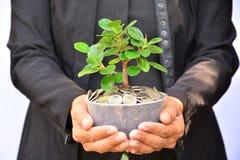 Os povos que guardam o vaso de flores têm a planta verde e as moedas no vaso de flores Fotos de Stock