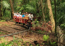 Fuga na selva Imagens de Stock Royalty Free