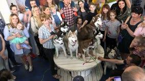 Os povos são fotografados em Husky Dog Show video estoque
