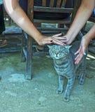 Os povos são trocas de carícias um o gato Fotos de Stock