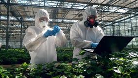 Os povos trabalham com plantas em uma estufa, testando as com líquido em um tubo filme