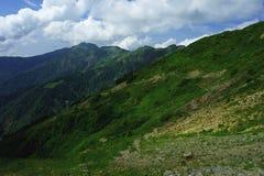 Os prados e as montanhas alpinos no azul da névoa com verão bonito ajardinam Fotos de Stock Royalty Free