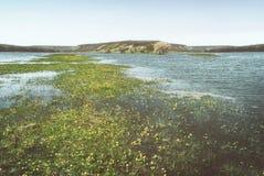 Os prados e os pastos no vale montanhoso inundaram com um rio da mola foto de stock royalty free
