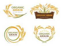 Os produtos orgânicos amarelos da grão do arroz 'paddy' e a bandeira saudável do alimento assinam a cenografia do vetor ilustração royalty free