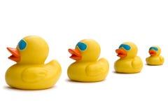 Os provérbios do negócio, começ nossos patos em uma fileira Fotografia de Stock Royalty Free