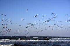 Os pássaros de mar tomam o vôo Imagem de Stock