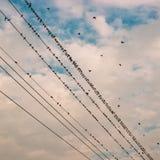 Os pássaros na linha elétrica cabografam contra o céu azul com backgroun das nuvens Fotografia de Stock