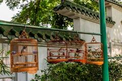 Os pássaros nas gaiolas que penduram no pássaro jardinam - 2 Fotos de Stock