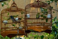 Os pássaros nas gaiolas que penduram no pássaro jardinam - 11 Fotos de Stock
